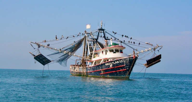 a shrimping boat